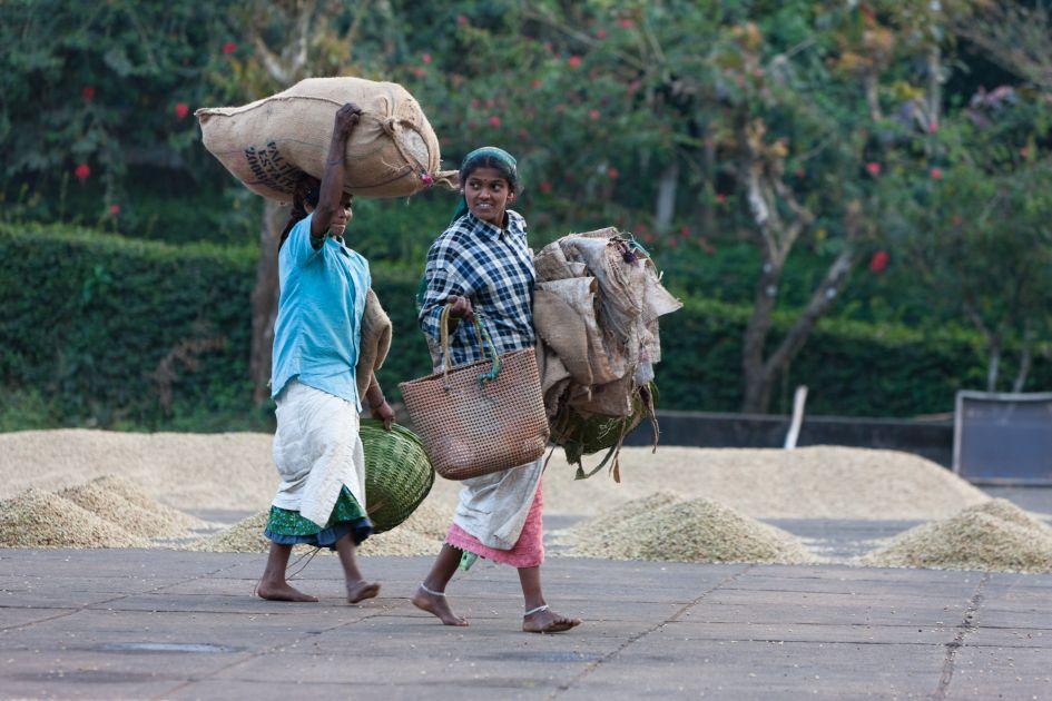 Kaffeepflücker mit Kaffeesack auf dem Kopf auf der Palthope Farm in Indien.